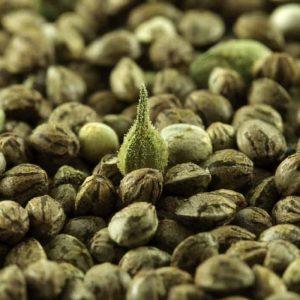 femenized hemp seeds